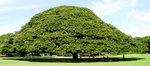 plant_top_20130201100425.jpg