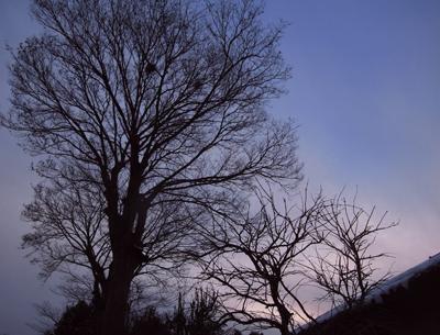 私の一部である木