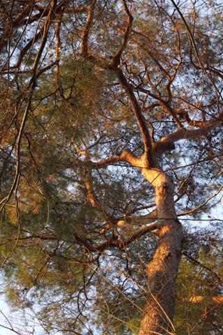 躍動する木