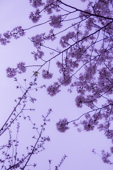 花の日々-2