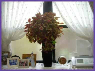 2011-08-016_convert_20110801182747.jpg