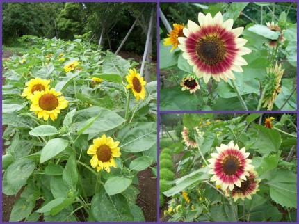 2011-08-041_convert_20110804111755.jpg