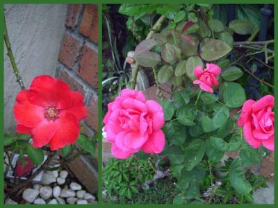 2011-10-0217_convert_20111002211013.jpg