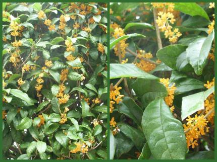 2011-10-072_convert_20111007113912.jpg