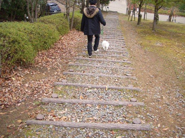 階段だって平気だよ~