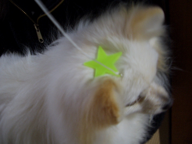 頭に1つに星がある犬