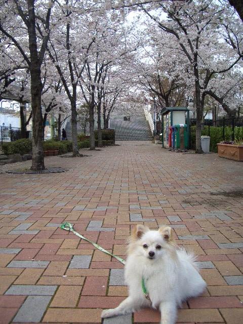 桜道とルイ