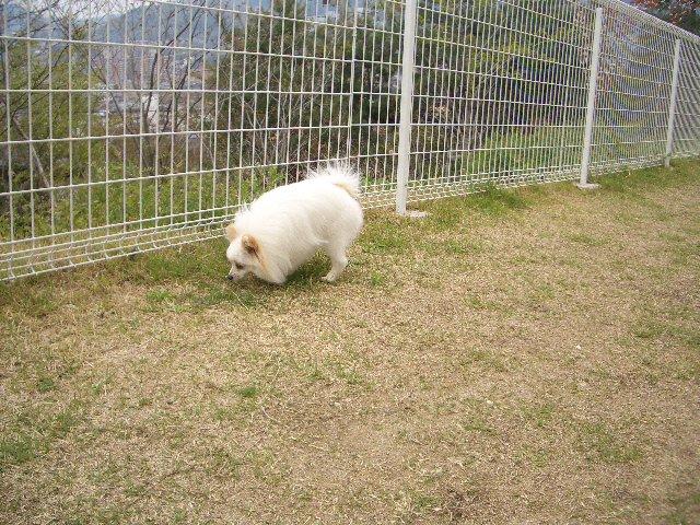 クンクン犬1