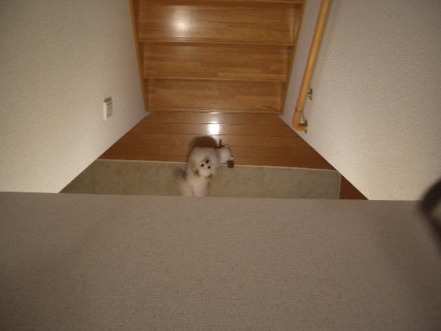 階段下にて2