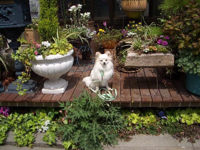 草花に囲まれて~1