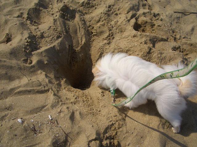 ここ掘れ ワンワン