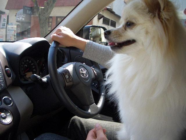運転は任せるでしゅよ