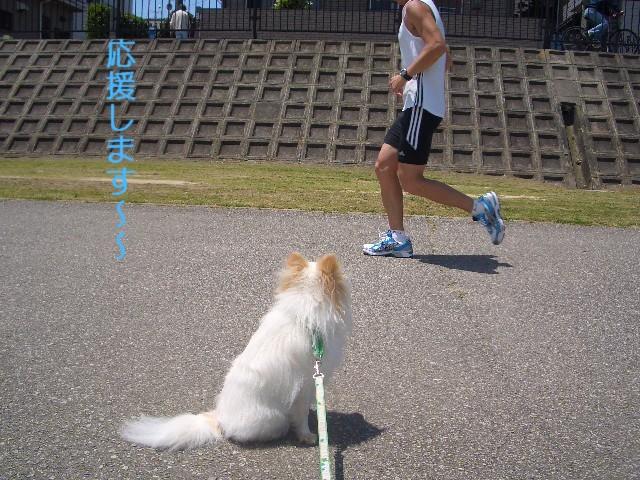 沿道の応援犬