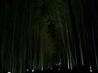 嵐山花灯籠