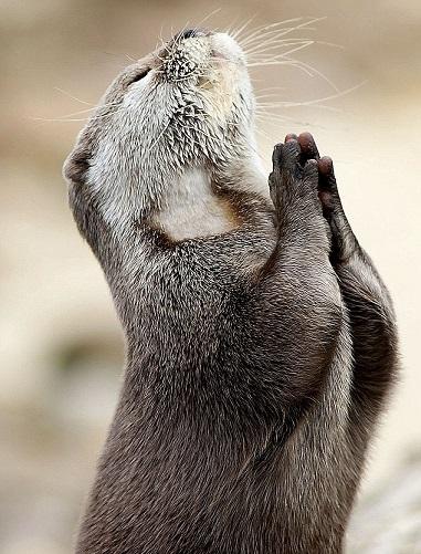 祈りの姿3B