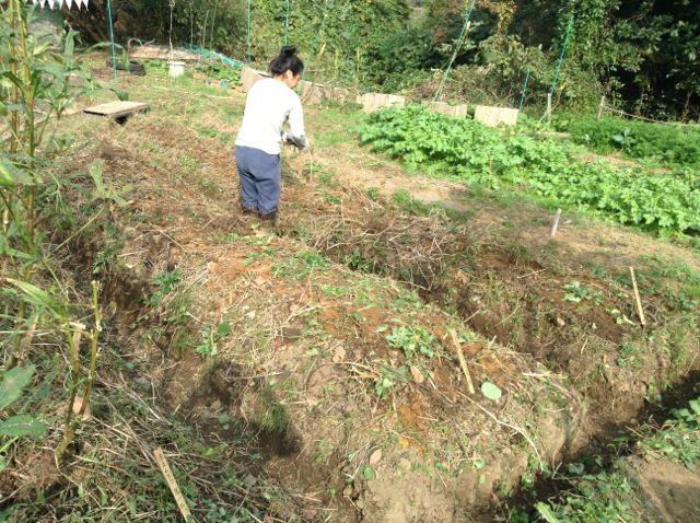 11:12・畝の整備と種蒔き