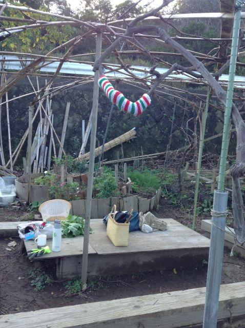 11:30・リカコ作葡萄の木