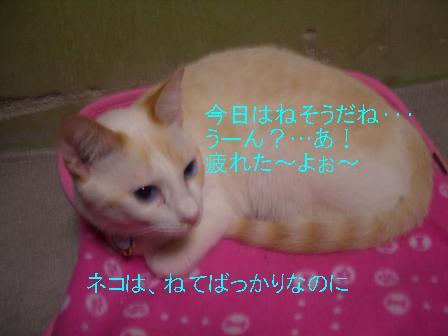 3きょろちゃん