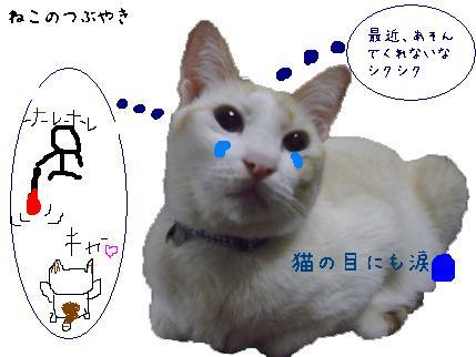 IMGP1085_R ペインヨ