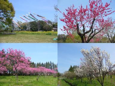 古河総合公園 花