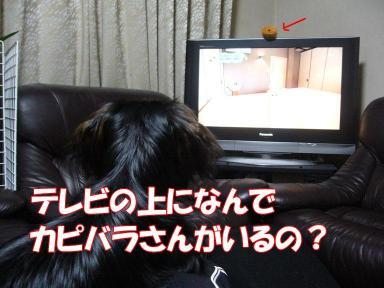 P1020506-2.jpg