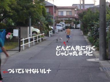 P1030390-1.jpg