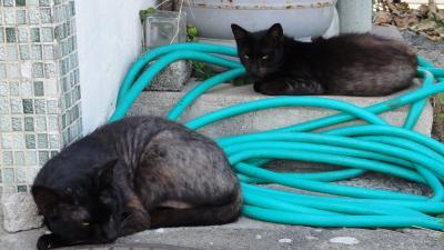 1409東尋坊タワー猫