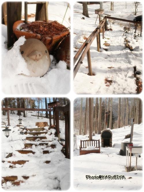 cats1_20130204142921.jpg