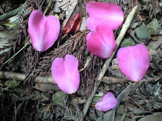 ハート型の花弁