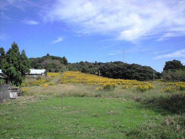 平岡の風景