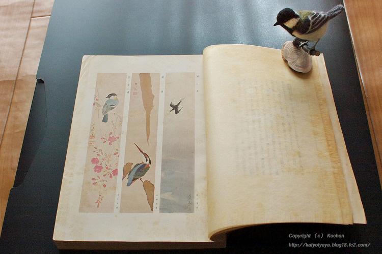 野鳥 機関紙