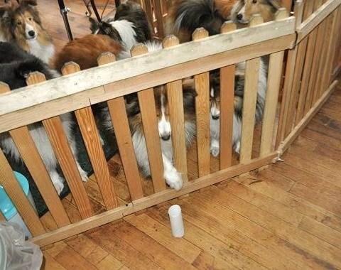 看板犬たち