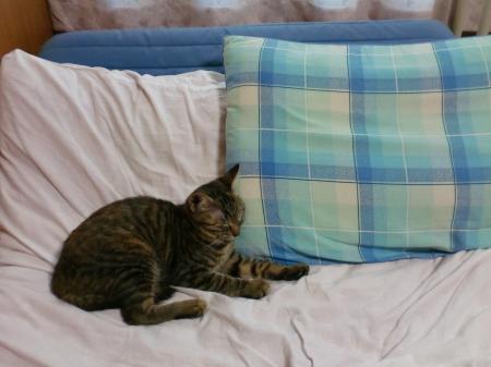 枕でZzz 1