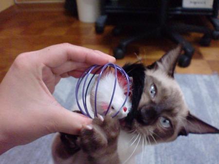 おもちゃ レオ1