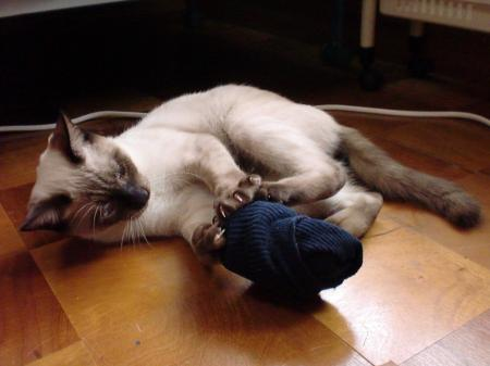 靴下 レオ2