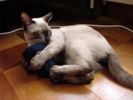 靴下 レオ1
