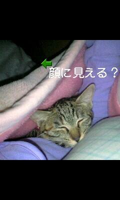 moblog_4f09d2ca.jpg