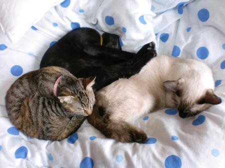 猫とドコモダケ