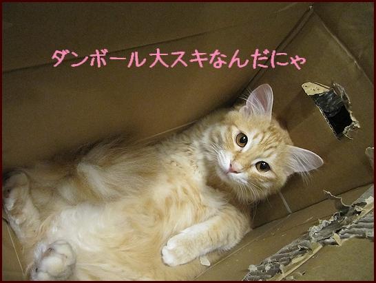 りっくんの仕業.jpg