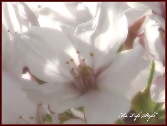 花びら.jpg