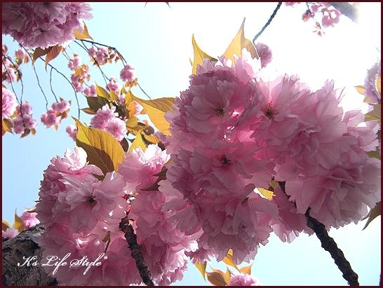 花盛り.jpg