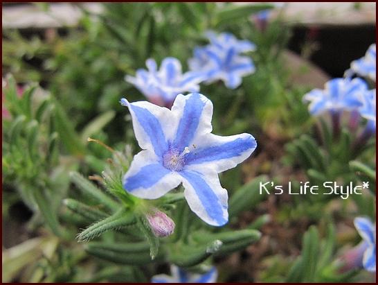 小さな花.jpg