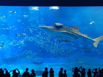 3062013美ら海水族館S1
