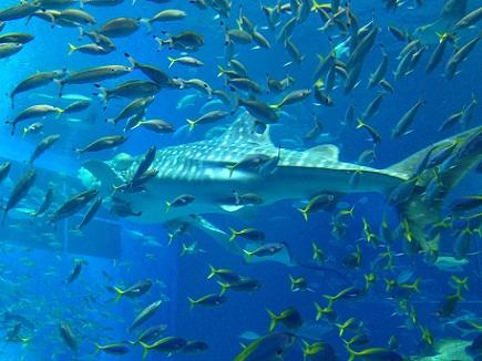 3062013美ら海水族館S2