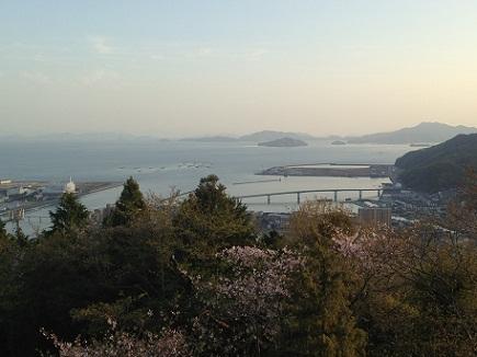 4082013大空山桜S2