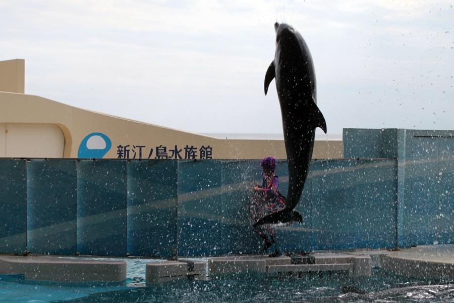 新江ノ島水族館 イルカショー