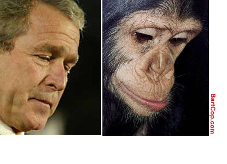 bush-chimp-pray1.jpg