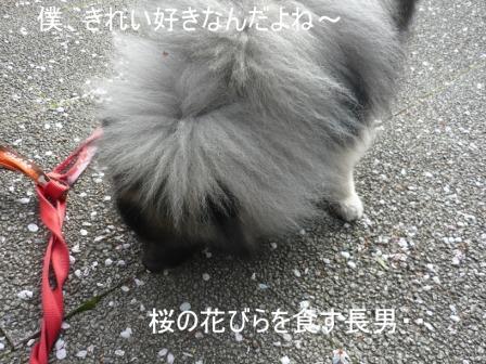 P1060468.jpg