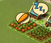 にんじん収穫可能