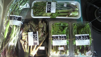 20130504山菜